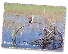Okeechobee Wildlife